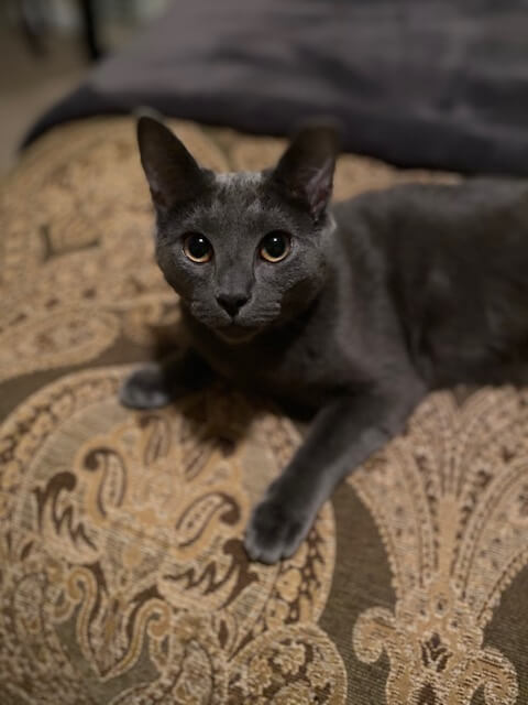 Oliver, Nina's Cat